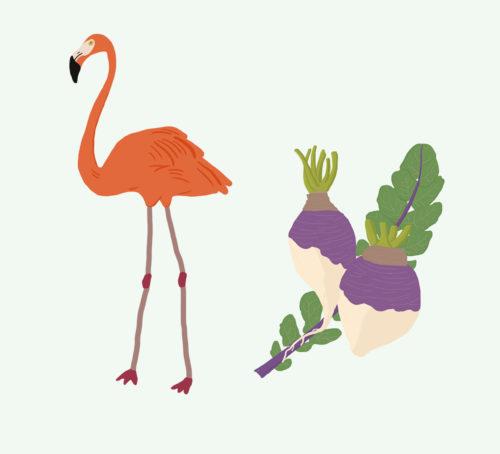 Illustrations Fruits/Légumes